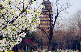 Small Wild Goose Pagoda in Xian
