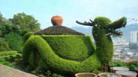 Huge Dragon Teapot in Anxi's Tea Garden
