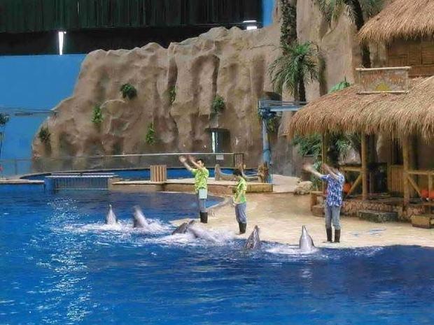 Dolphin Show Beijing Aquarium Beijing Beijing Aquarium