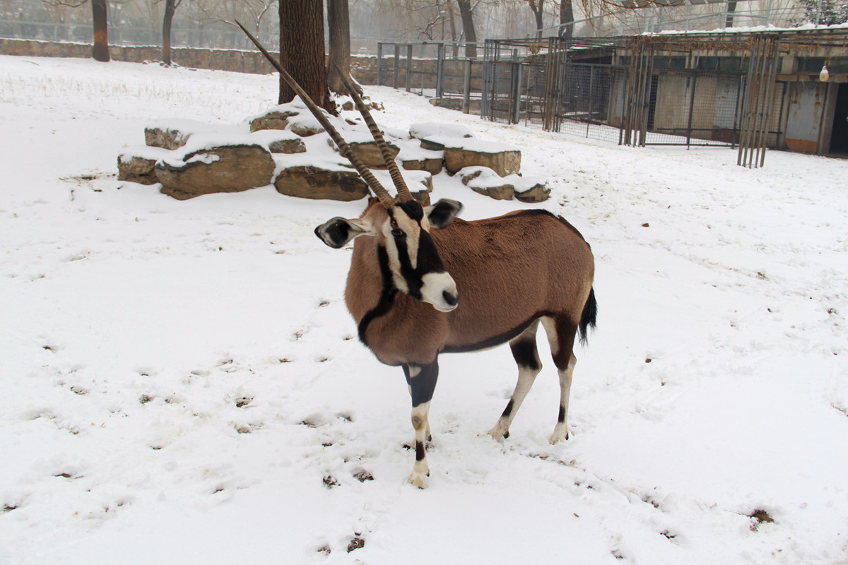 Animals In Beijing Zoo Beijing Zoo Photos Beijing Zoo