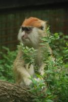 Monkey in Beijing Zoo