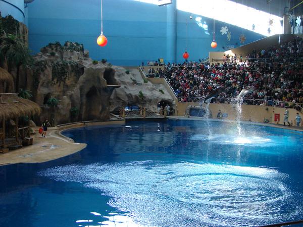 dolphin show in beijing zoo beijing beijing zoo travel