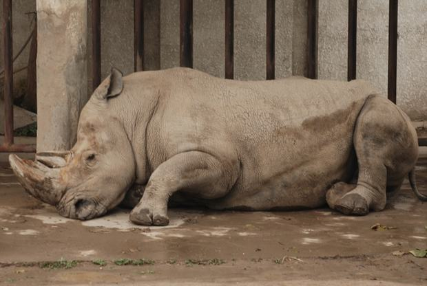 Rhinoceros in Beijing Zoo