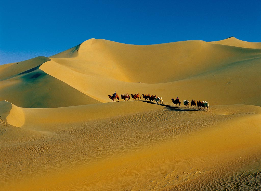 Beautiful Sand Dune & Camels