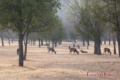 Mulan Paddock Picture in Chengde