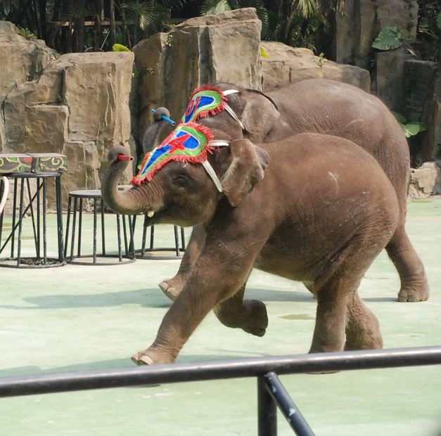 Chimelong Holiday Resort Elephant Show