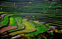 Danzhai Rice Terraces