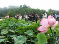 Dianchi Lake and Daguan Park Lotus、