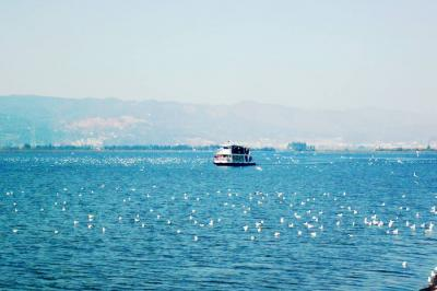 Dianchi Lake Scenery with Birds