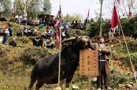 the winner of Dong's Buffalo Fighting Festival