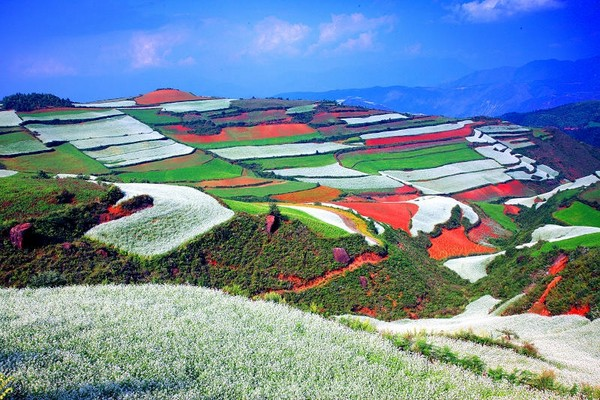 Red Scenery Pictures Spring Scenery of Red Land