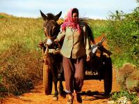 Local Lady & Donkey Cart