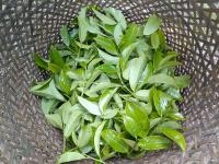 Fresh Dancong Tea Leaves