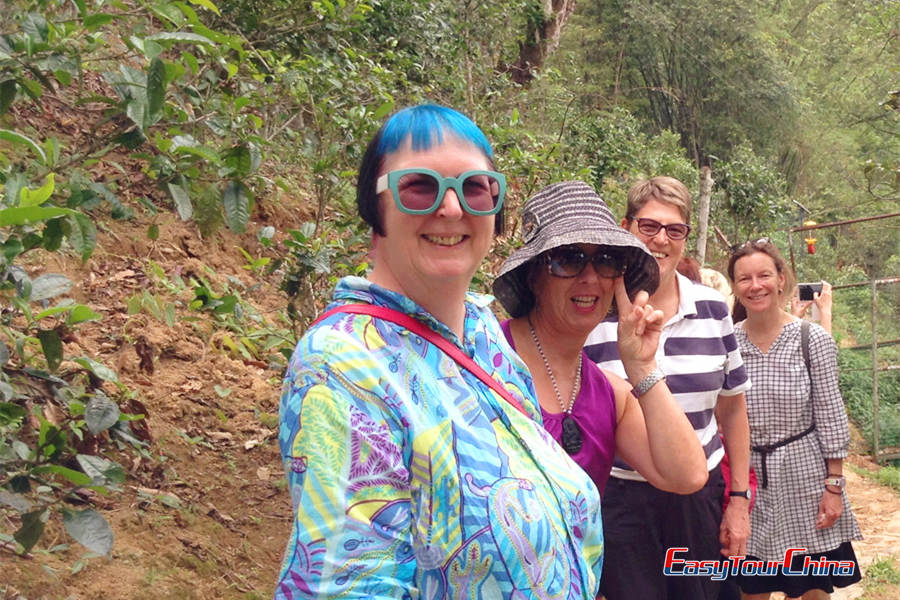 Clients Visiting Chaozhou Phoenix Tea Mountain in 2015