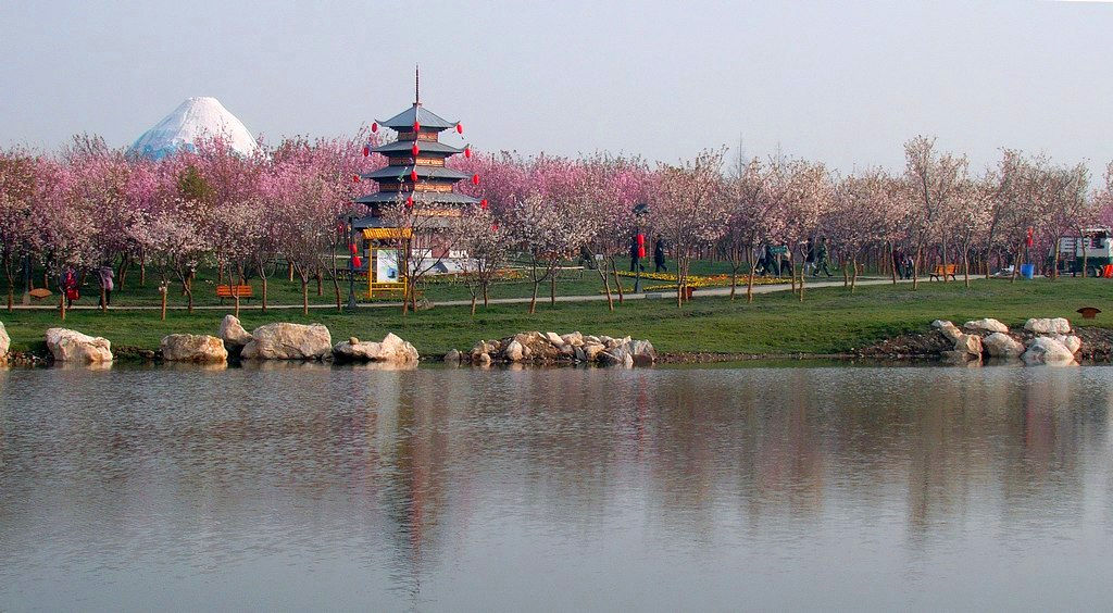 Cherry Blossom Forest at Fenghuang Lake, Chengdu
