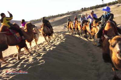 Explore Dunhuang's Desert with Camel Ride