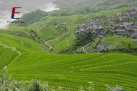Bike to Long Rice Terraced Fields