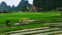 Bike to the rice fields Guilin