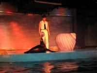 Harbin Polarland (Pole Aquaruim) Seal Show