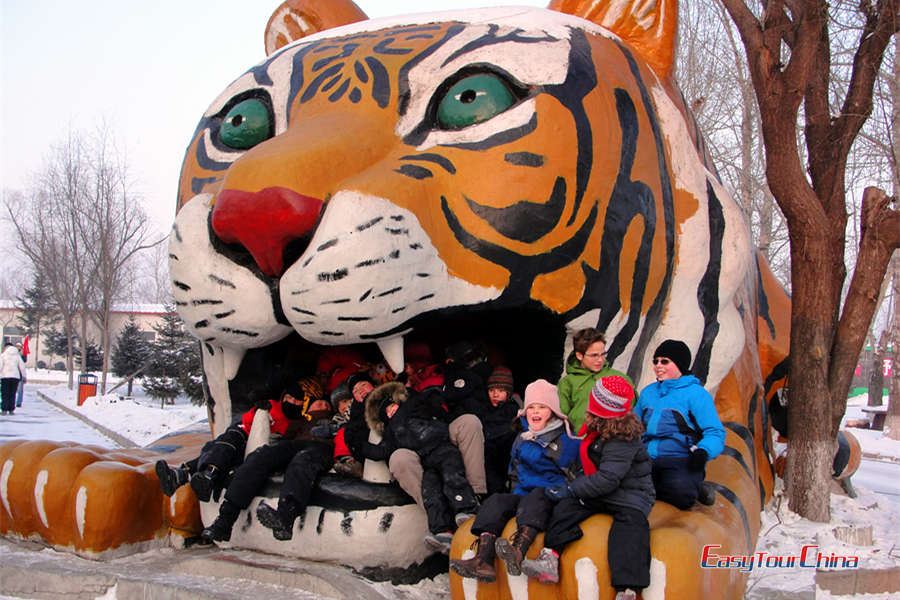 Framily Travel in Harbin Siberian Tiger Park