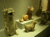 Henan Museum Animals