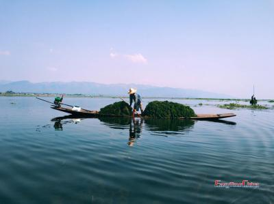 Traditional Fishing at Inle Lake