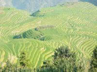 The Sublime Jinkeng Rice Terraces