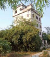 Kaiping Diaolou Nestling Under Trees