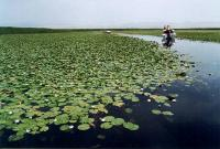 Boating on Lotus Lake