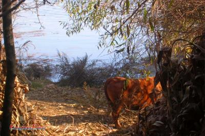 A horse beside Lashi Lake