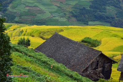 Longji Rice Terraces and Traditional Dwellings