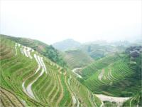 A Scene from Longji Rice Terraces