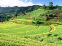 Beautiful Scenery of Longji Rice Terraces