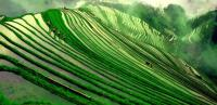 Longji Terraced Fields in A Green World