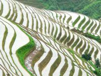 A Part of Longji Rice Terraces