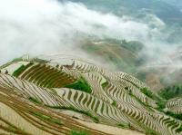Longji Rice Terraces Beauty