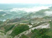 longji rice terraced