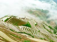 The Panorama of Longji Rice Terraces