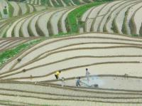Longji Rice Terraces Fammers Tilling