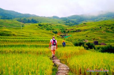 Hiking Along Longji Rice Terraces