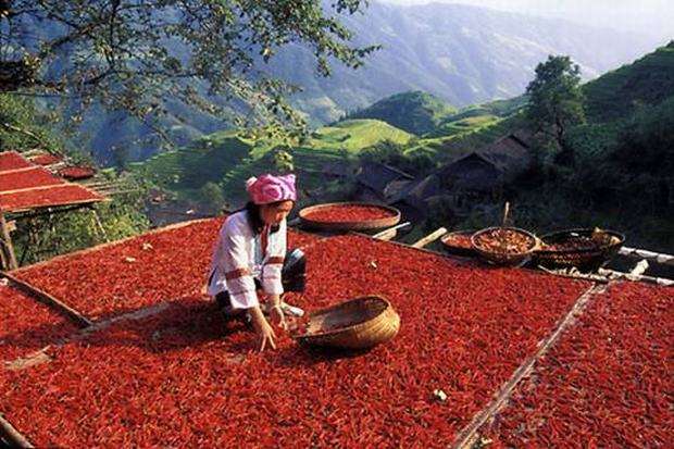 Longji Rice Terraces Red Pepper