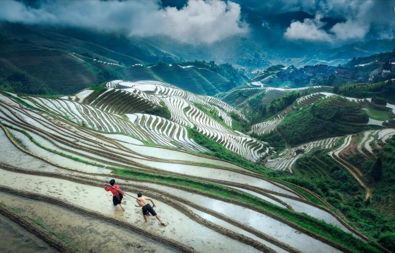 Longji terraces listed as globally important agriculture for 100 rice terrace drive columbia sc