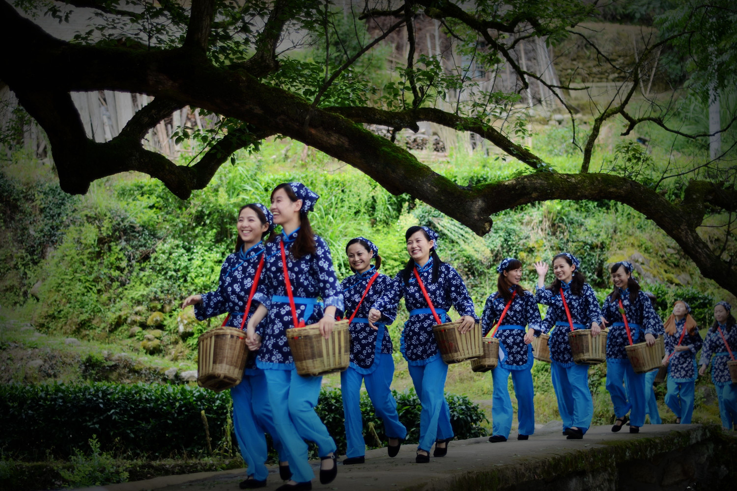 Tea-picking Girls in Longjing Village