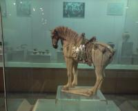 Luoyang Museum Horse Statue
