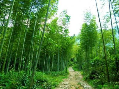 Mao'er Mountain's Bamboo Forests