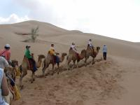 Visitors Riding Camels