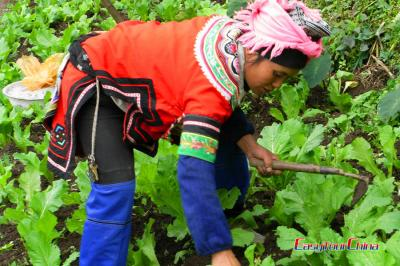 Hani woman from Honghe is farming