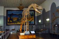 Mongolian Museum of Natural History