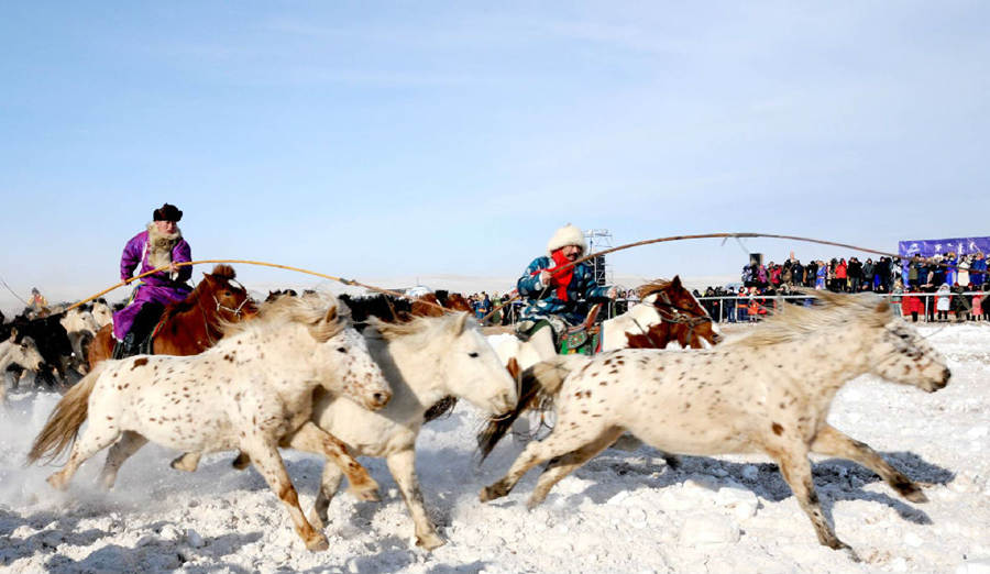 Horse Racing at Mongolian Naadam Festival