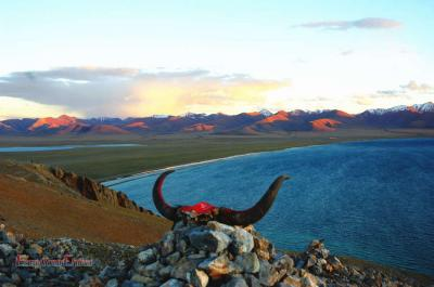 Yak Horn at Namtso